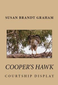my Cooper's hawk book