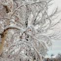 Albuquerque Winter