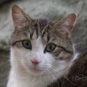 Spunk, the Photographer's Model Cat