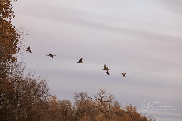 DNA  cranes