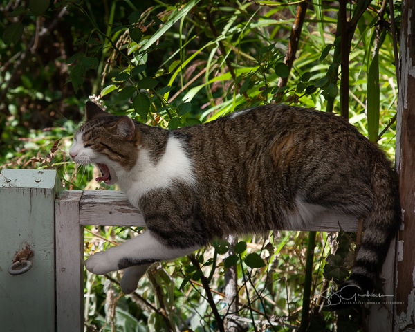 garden delights cat