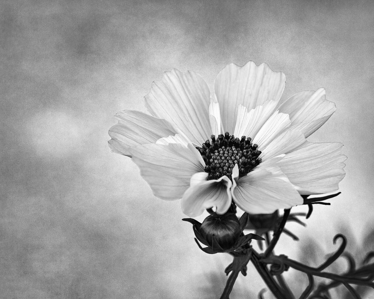 cosmos, black and white photography