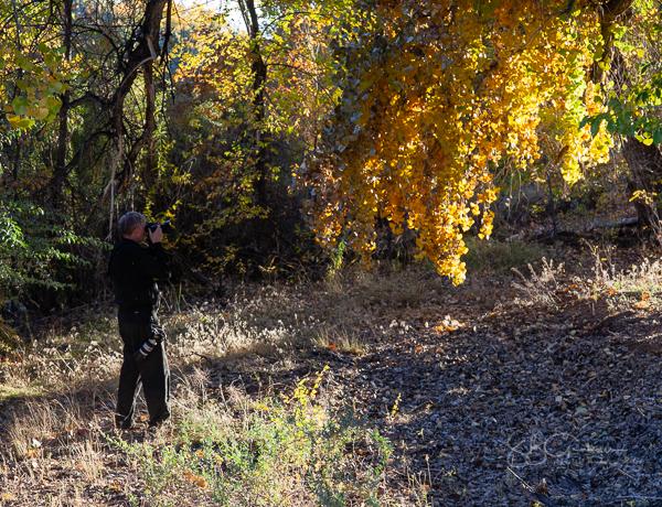 bosque in autumn