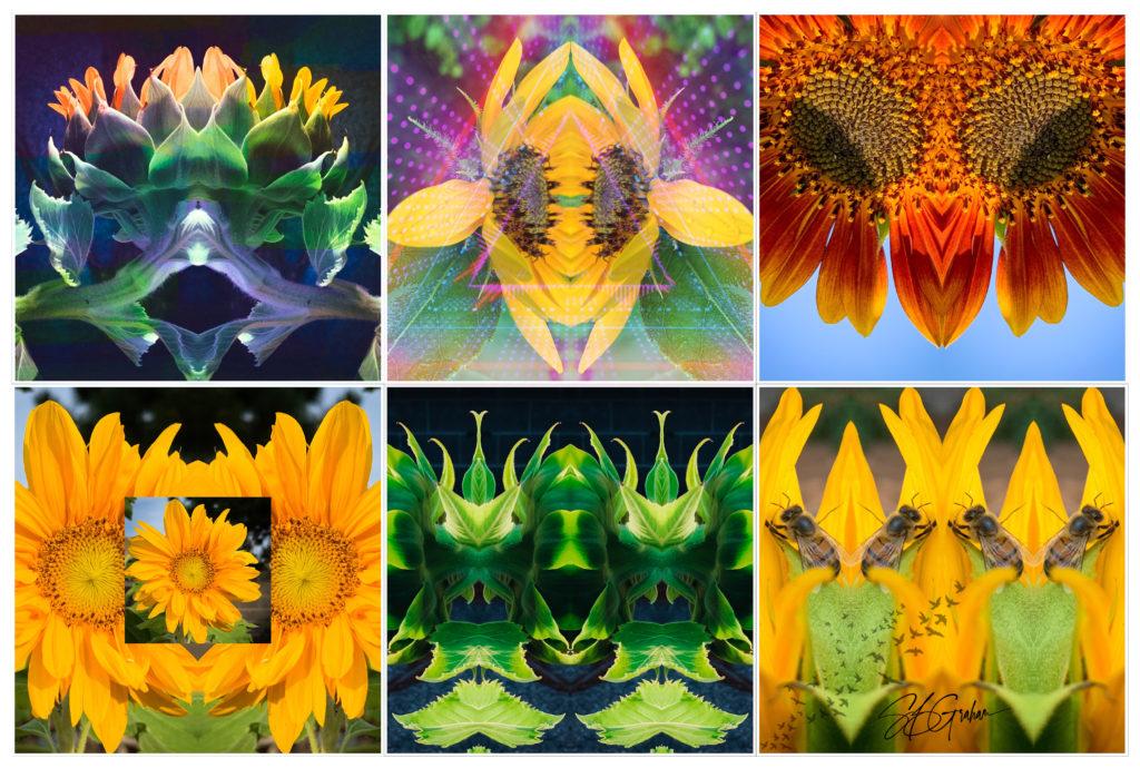 floral whimsies